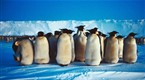 National Geographic Specials | Emperors of the Ice | PBS