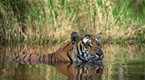National Geographic Special | India: Land of the Tiger | PBS