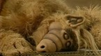 ALF Season 1 Episode 1 - ALF Season 1 Episode 1